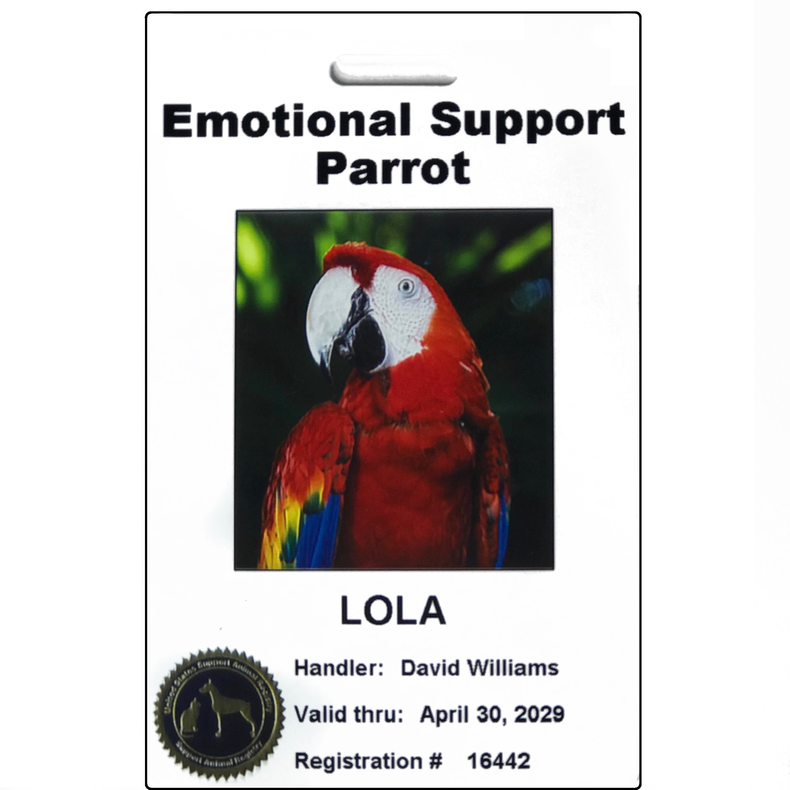 Emotional Support Parrot